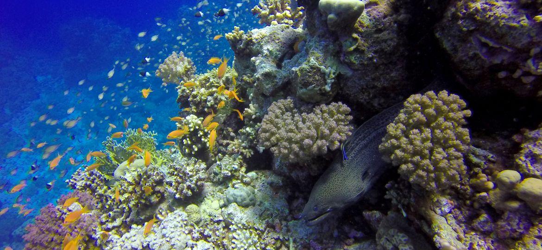 Arrecife de coral en Habili Ali (área de St.Johns), Mar Rojo Egipcio (zona sur)